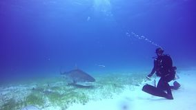 L'operatore subacqueo controlla il underwater dello squalo sul fondo sabbioso dell'Oceano Atlantico video d archivio