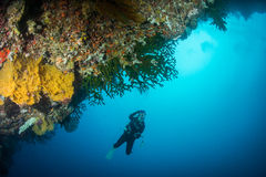 L'operatore subacqueo di scuba cattura la foto immagini stock