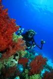 L'operatore subacqueo di scuba esplora la barriera corallina con la sua macchina fotografica Immagini Stock Libere da Diritti
