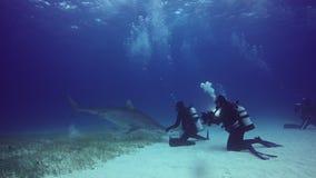 L'operatore subacqueo doma il underwater dello squalo di toro sul fondo sabbioso delle Bahamas video d archivio