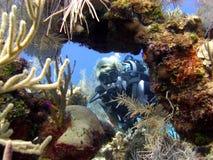 L'operatore subacqueo gode di un tuffo pieno di sole Immagini Stock Libere da Diritti