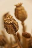 L'opium sec Image stock