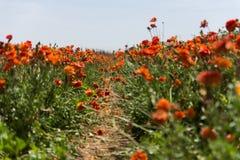L'orange est la nouvelle fleur Image stock