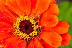 L'orange est le nouveau noir image libre de droits