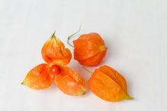 L'orange porte des fruits Physalis Photo libre de droits