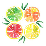 L'orange quatre lumineuse savoureuse segmente le croquis de main d'aquarelle Images stock