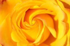 L'orange s'est levée photographie stock libre de droits