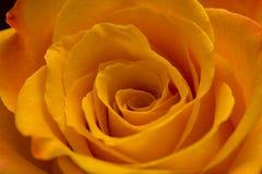 L'orange s'est levée Images libres de droits