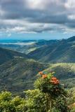 L'orange sauvage fleurit avec le fond peu profond de Rolling Hills Images libres de droits
