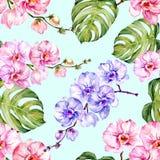 L'orchidée bleue et rose fleurit et le monstera part sur le fond bleu-clair Configuration florale sans joint Peinture d'aquarelle illustration de vecteur