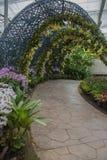 L'orchidée et l'arbre jaunes de jardin percent un tunnel le passage couvert en parc Images libres de droits
