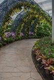 L'orchidée et l'arbre jaunes de jardin percent un tunnel le passage couvert en parc Photographie stock libre de droits