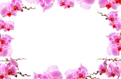 L'orchidée fleurit le cadre avec l'espace blanc de copie Image stock