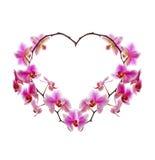 L'orchidée fleurit le coeur Photos libres de droits