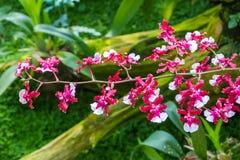 L'orchidée rose de couleur fleurit sur le fond vert trouble de nature Image stock