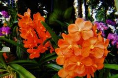 L'orchidée rouge de fleur abaisse la fleur ornent au printemps la beauté de la nature photos libres de droits