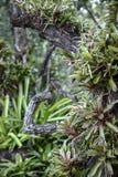 L'orchidée se développe près des branches images libres de droits