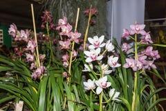 L'orchidée tropicale est l'une des fleurs les plus belles sur terre Images stock