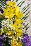 L'orchidaceae è una diversa e famiglia diffusa di fioritura fotografia stock libera da diritti