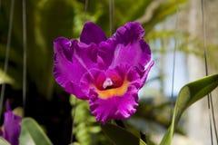 L'orchidée Image libre de droits