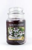 L'orchidea del Madagascar ha sentito la candela del yankee su un fondo bianco Immagine Stock Libera da Diritti