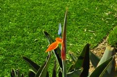 L'orchidea di fioritura nel giardino verde Fotografie Stock