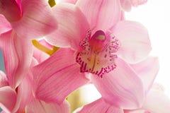 L'orchidea fiorisce il bello fondo floreale per le cartoline d'auguri, le carte da parati, le coperture, le screen saver, i manif Fotografia Stock