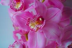 L'orchidea fiorisce il bello fondo floreale per le cartoline d'auguri, le carte da parati, le coperture, le screen saver, i manif Fotografie Stock Libere da Diritti