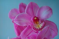 L'orchidea fiorisce il bello fondo floreale per le cartoline d'auguri, le carte da parati, le coperture, le screen saver, i manif Immagine Stock Libera da Diritti