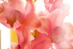L'orchidea fiorisce il bello fondo floreale per le cartoline d'auguri, le carte da parati, le coperture, le screen saver, i manif Immagini Stock Libere da Diritti