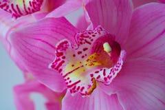 L'orchidea fiorisce il bello fondo floreale per le cartoline d'auguri, le carte da parati, le coperture, le screen saver, i manif Fotografie Stock