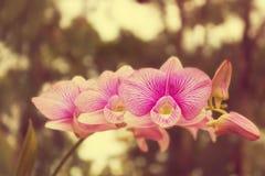 L'orchidea fiorisce sull'albero con stile d'annata di effetto del filtro retro fotografia stock