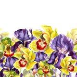 L'orchidea verde chiaro ed arancio di giallo disegnato a mano dell'acquerello fiorisce Confine senza cuciture in uno stile dell'a Immagini Stock Libere da Diritti