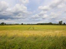 L'orge de Yorkshire cultive sous un ciel nuageux d'été Image stock