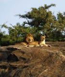 L'orgoglio dell'Africa Fotografia Stock