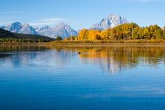 L'orignal nage dans les réflexions du lac grand de tetons Image libre de droits