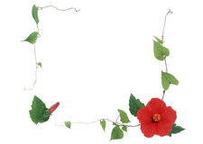 L'ornamento del fiore Fotografia Stock Libera da Diritti