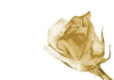 L'oro è aumentato Fotografia Stock Libera da Diritti
