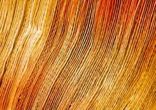 L'oro allinea, barrato la struttura, strutture vaghe soleggiate Fotografia Stock