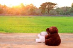 L'orsacchiotto riguarda il fondo delle risaie e di legno Immagine Stock Libera da Diritti