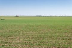 L'orzo sistema in un sistema dell'agricoltura della terra asciutta Fotografia Stock