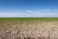 L'orzo sistema in un sistema dell'agricoltura della terra asciutta Immagine Stock