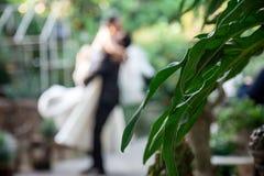 L'oscillation de tourbillonnement de The de jeunes mariés heureusement par ont la feuille sont le premier plan Photographie stock libre de droits