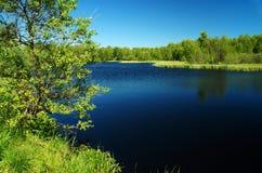 L'oscurità attracca il lago nel verde Fotografie Stock Libere da Diritti
