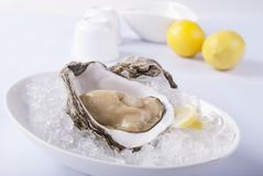 L'ostrica ed il cubetto di ghiaccio freschi vengono con il limone fotografia stock