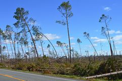L'ouragan a endommagé des arbres photos libres de droits