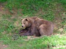 L'ours Image libre de droits