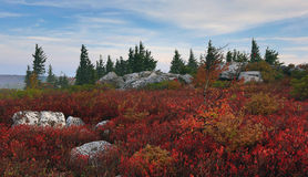 L'ours bascule Dolly Sods West Virginia Images stock
