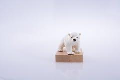 L'ours blanc est sur les blocs bullding Photographie stock