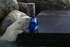 L'ours blanc jouant images libres de droits